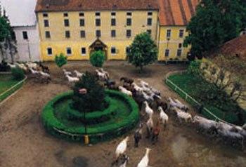 Kladruby nad Labem