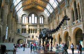 Londonas, National History Museum