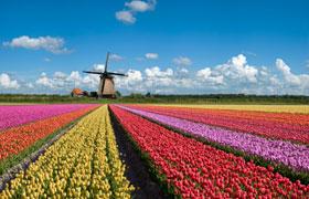 Žydintis pavasaris Europoje