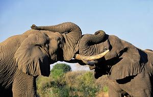 Pėsčiomis po Krugerio nacionalinį parką, Pietų Afrika