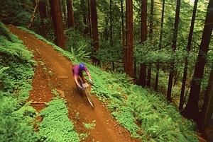 Kalnų dviračiais po Marin County, JAV