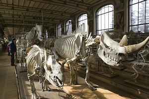 Paryžiaus Gamtos istorijos muziejus