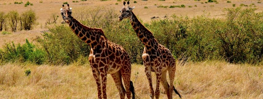 Šeimos kelionė į Serengečio, Brėmeno, Heidės pramogų parkus